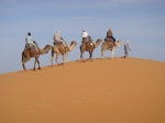 Camel rides, Morocco, Erg chebbi dunes