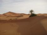 Erg Chebbi dunes, Sahara Desert