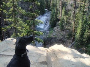 dog Teva, black lab, at Tumalo Falls