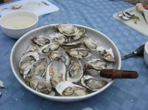 oysters, Taylor Shellfish Farms