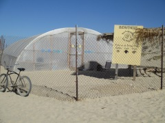 Turtle Camp, Baja