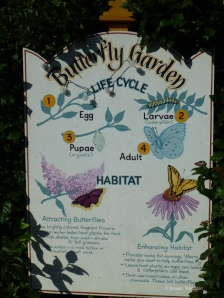 Butterfly lifecycle sign close up_small